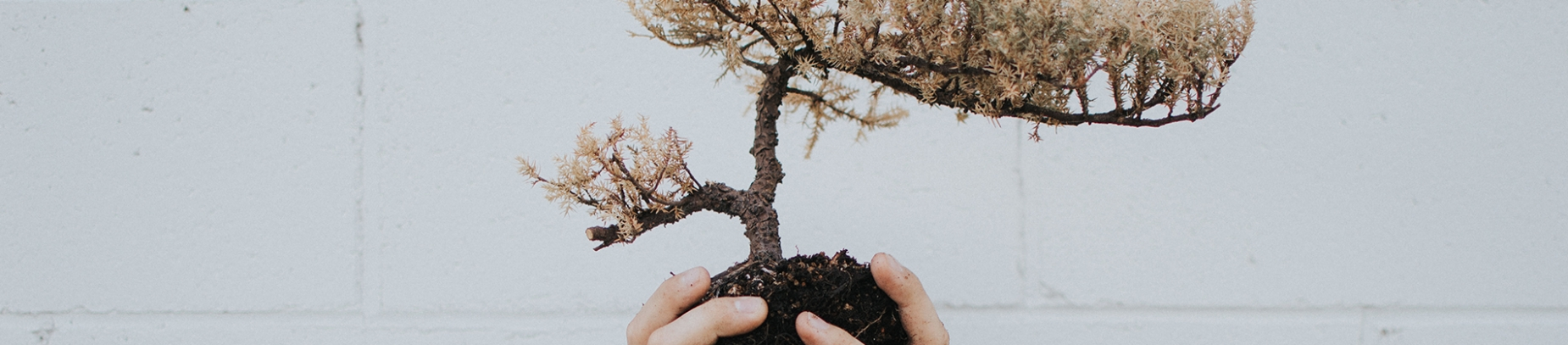 A person holding a small tree by its roots
